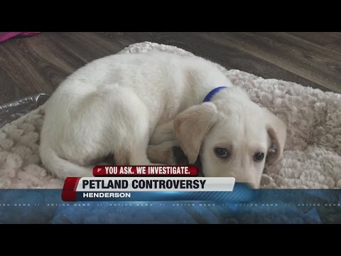Henderson Petland Under Fire Again For 'skinny Puppies'