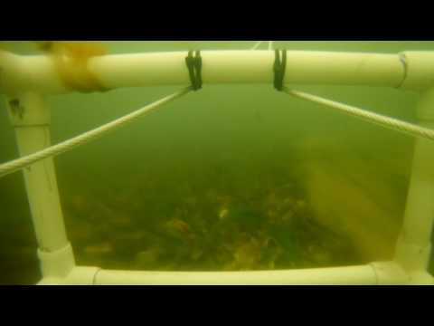 Build and First Test of Undersea Seabed Rover GoPro Platform Bass River Cape Cod