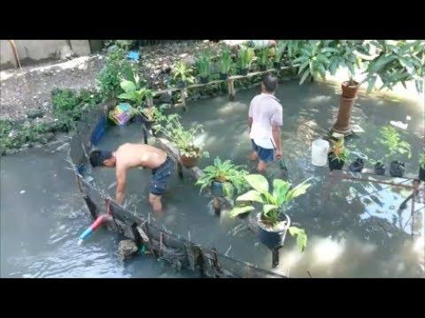 Storm drain fish pond iligan city mindanano philippines for Koi pond quezon city