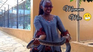 FACING FEARS  | Things to do in Nairobi - Snake Park