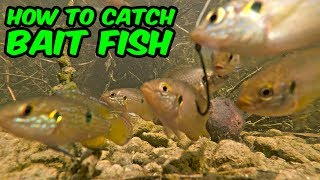 Micro Fishing! HOW TO CATCH BAIT FISH | Monster Mike