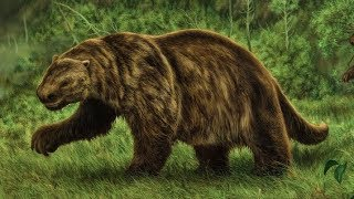 Giant Ground Sloth - Ancient Animal