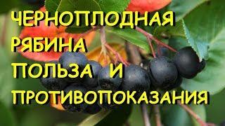 Черноплодная рябина лечебные свойства и противопоказания.