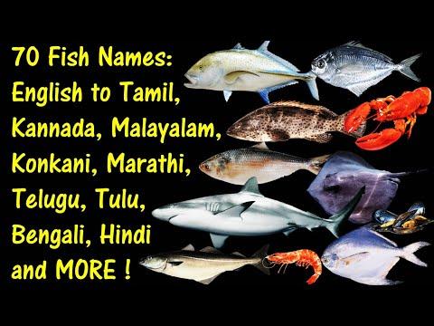 70 FISH NAMES: ENGLISH TO TAMIL, KANNADA, MALAYALAM, MARATHI, TELUGU, KONKANI, BENGALI, TULU & HINDI