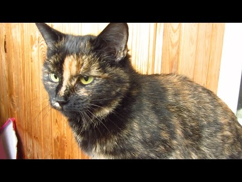 Caring for tortie cat after spayed