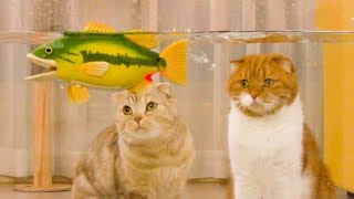 I went fishing with the cats! a Big Bass caught!