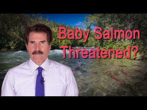 Stossel: Baby Salmon Threatened?