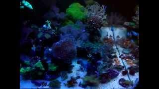 Морской аквариум 400л - 20.10.2014(, 2014-10-20T21:55:09.000Z)