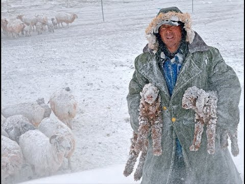 Nomads of the Great steppe (І) Altay