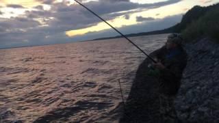 Рыбалка на Волге. Рыбинский район, п. Глебово.  Первый крупный лещ :)))