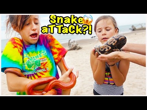 Thumbnail: 🐍 WE FIND SNAKES ON THE BEACH!! WILL THEY BITE?! 🐍 WE SURVIVE ON BANANAS!