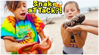 � WE FIND SNAKES ON THE BEACH!! WILL THEY BITE?! � WE SURVIVE ON BANANAS!