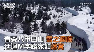 青森八甲田山「雪之迴廊」 迂迴M字路宛如迷宮