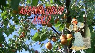 Абрикосовый ликер. Apricot liquor.