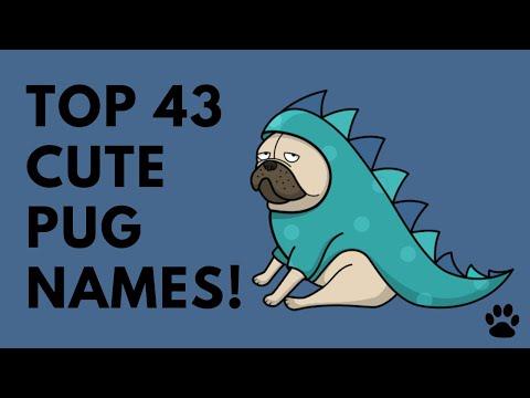 Pug Names - 43 Cute & Popular Ideas | Names