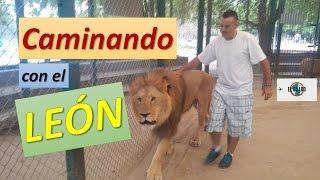 Caminando con el Leon | Zoo Lujan | El Guaro