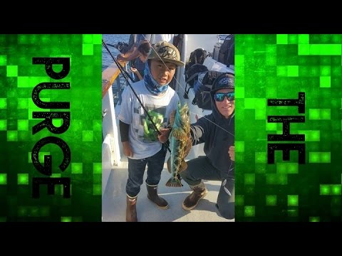 San Diego Fishing: (Chubasco 2) - Father's Day Weekend Fishing Trip   The Purge