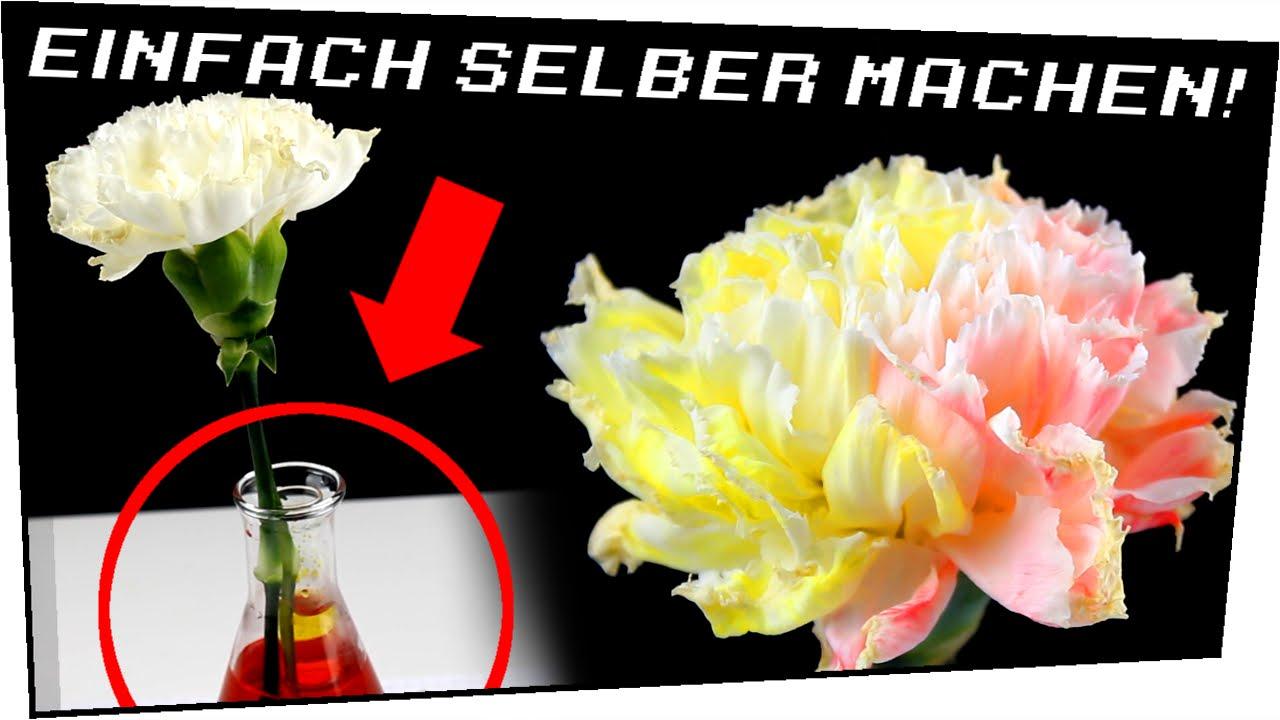 Regenbogenblumen EINFACH selber machen! - Heimexperimente #58 - YouTube