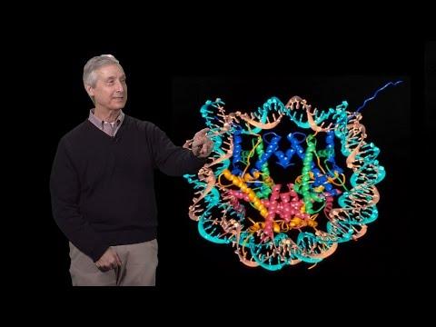 C. David Allis (Rockefeller U.) 2: Epigenetics in Development and Disease