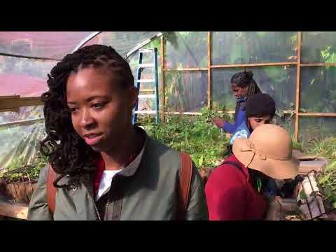 Urban Ecology Arts Exchange 2018 ReCap Video (ROUGH CUT)