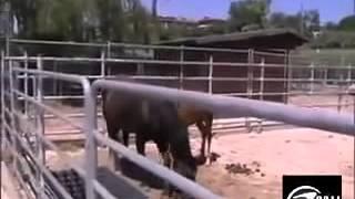Conheça o raro animal que nasceu do cruzamento de uma ze com ...