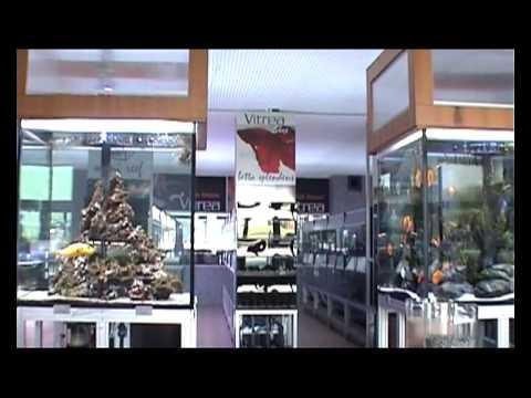 acquari outlet di vitrea youtube