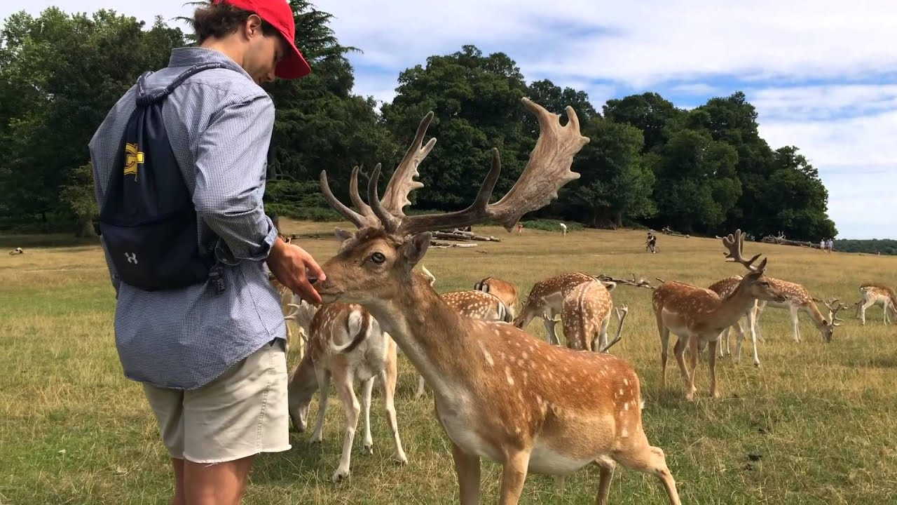 Richmond Park Deer Youtube