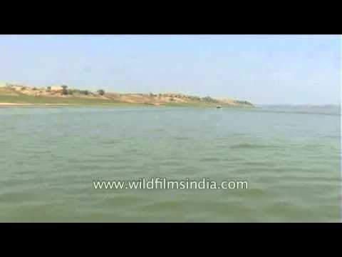 The most pollution free river of India - the Chambal