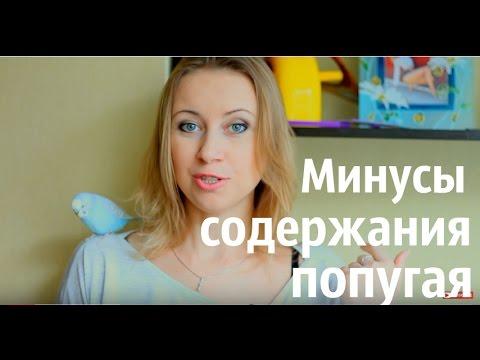 Вопрос: Форумчане, хочу попугайчика для дочи. Где покупали?