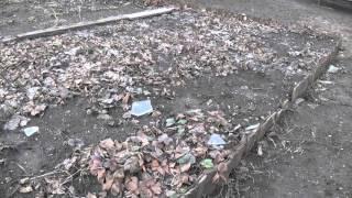 Клубника, нужно пересаживать(Короткое видео посвященное пересадке клубники., 2016-03-04T05:34:55.000Z)