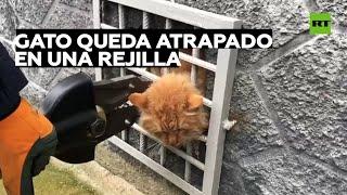Rescatan a un gato atrapado varios días entre los barrotes de una reja