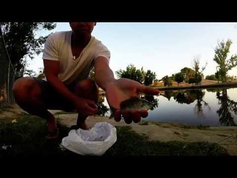 Woodward park fresno ca fishing for bluegills and bass for Fresno fishing report