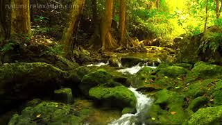 Видео Обои - Ручеи В лесу