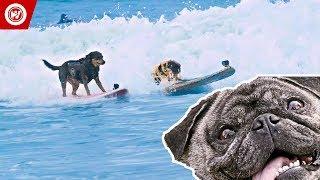 Scott Rogowsky Shows You Weird Sports | Dog Surfing