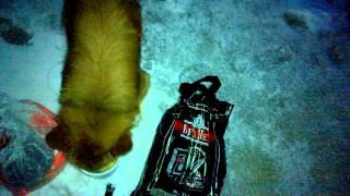Gambar cover Чудный пёс