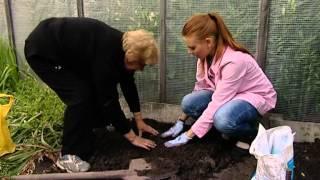 видео посмотреть о рулонных газонах