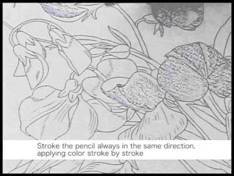 Nuri-e How to color by colored Pencils no.1/5 大人の塗り絵の塗り方
