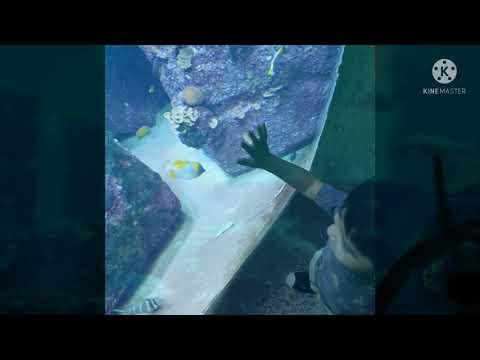The Lost Chamber Aquarium #Dubai #Uae #Atlantis #palmjumeirah