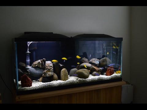 African Cichlids | Mbuna Stripping | Demasoni & Yellow Labs | Water Change | Breeding Colony
