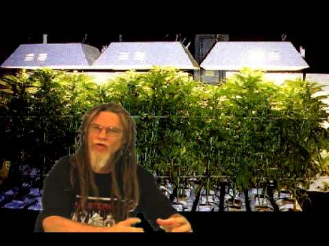 How To Grow Marijuana Hydroponics