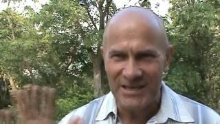видео Бархат амурский, амурское пробковое дерево (Рhellodendron amurense Rupr.)