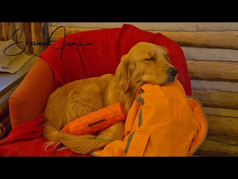What Does Cali Eat?   Golden Retriever at the Cabin