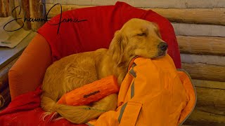 What Does Cali Eat? | Golden Retriever at the Cabin - My Self Reliance