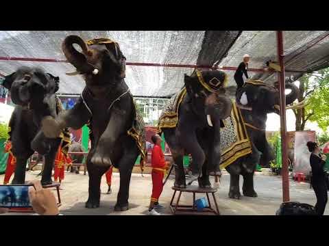 โชว์แสดงช้าง ที่วังช้างแลเพนียดอยุธยา 1/2