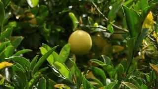 Gardenieres: Teena's Backyard Orchard Part 1