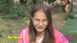 ЗООСАД: о жизни собачей в приюте Академгородка