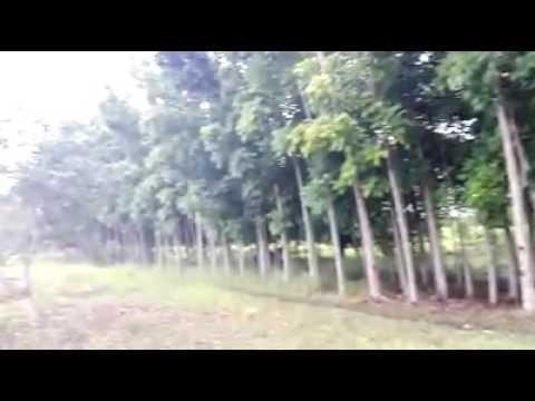 BOGO CITY CEBU, AGRICULTURAL LAND (FOR SALE)