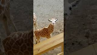 August 24, 2019 April and sons Animal Adventure Park
