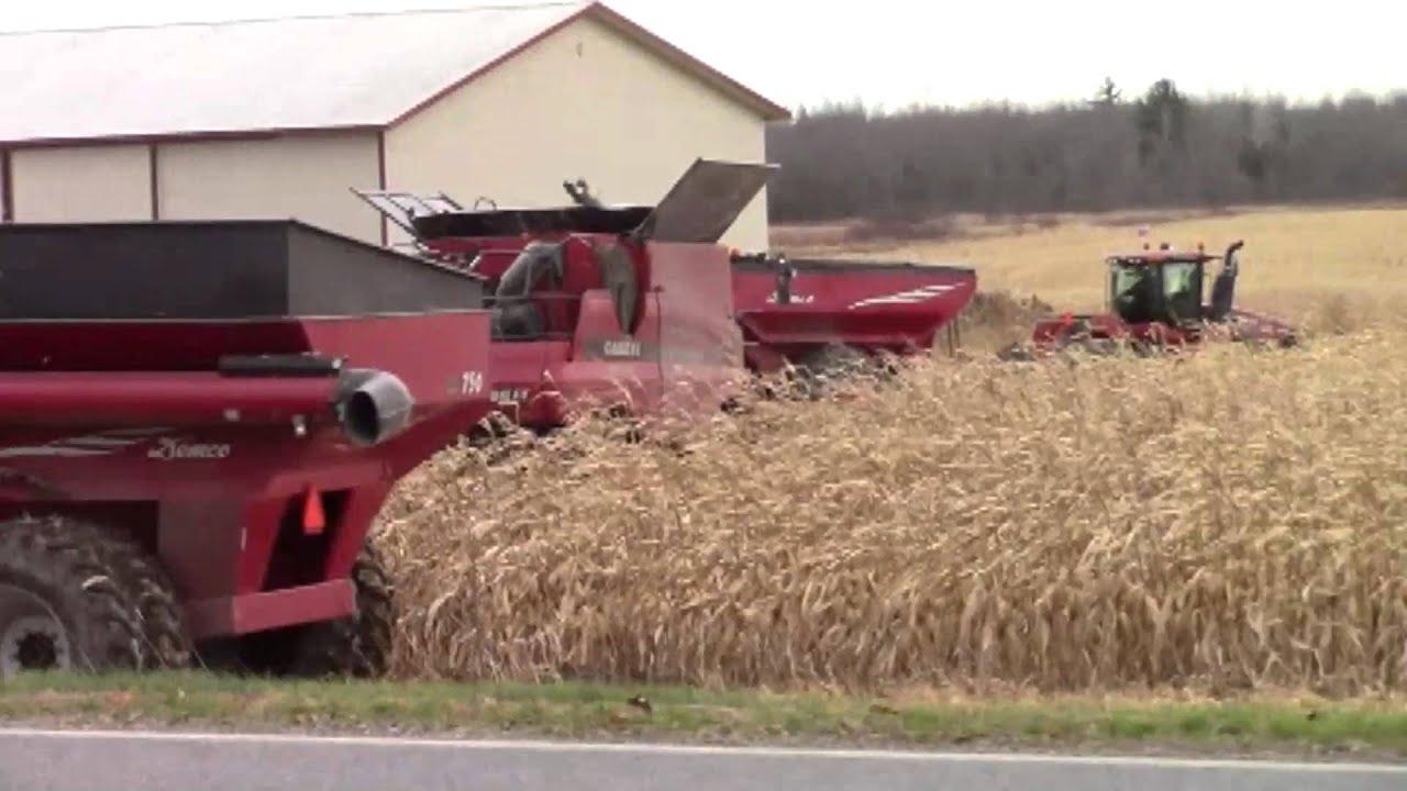 Harvesting Corn  11-19-15