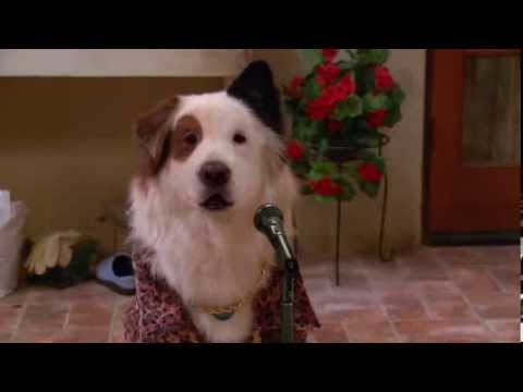 Dog With a Blog   Stan's Talent Show Ideas